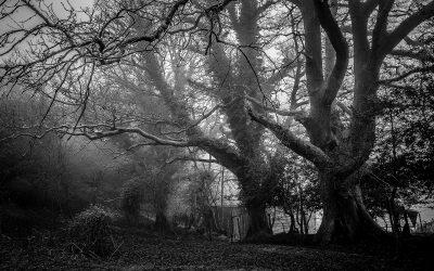 Tree branch wood black and white oak