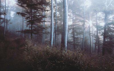 Wood fog mist sunlight morning autumn weather ecosystem
