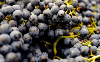 5 Questions About Grapes