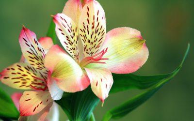 Bloom Blooming