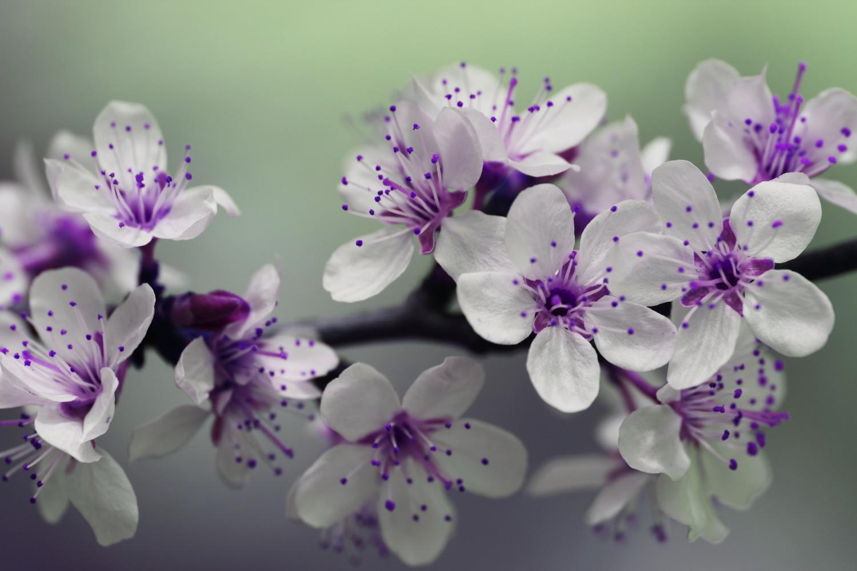 Blooming 132474