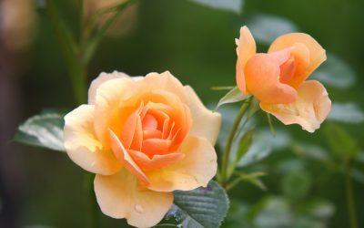 Flora 39517