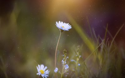 Blooming Blur