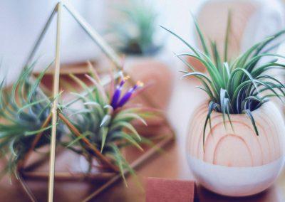 plant-nursery-22