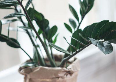plant-nursery-32