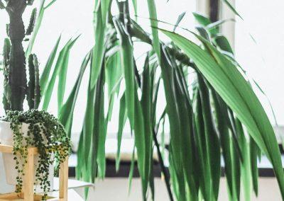 plant-nursery-37