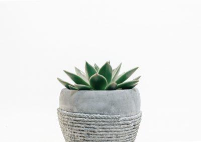 blur-botanical-close-up-1022922