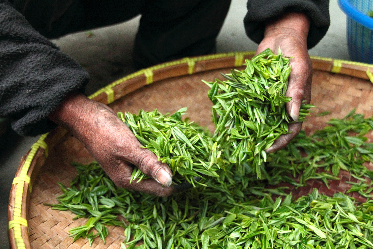 Drying in Tea Processing